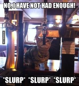 cat-drinking-beer