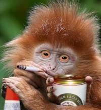 monkeybeerfag